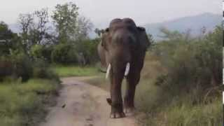 Corbett India  City new picture : Safari at Jim Corbett National Park- Tiger Safari in India