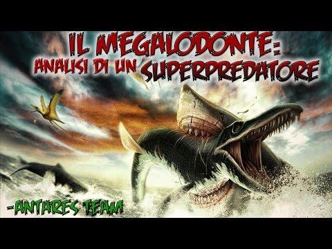 il megalodonte - analisi di un superpredatore
