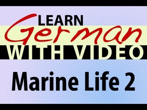 Learn German with Video – Marine Life 2