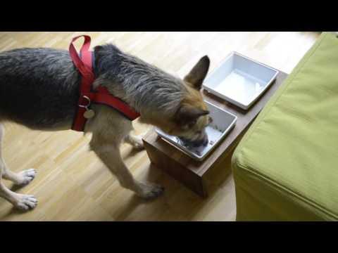 Hundefutter im Test: Bio-Nassfutter von