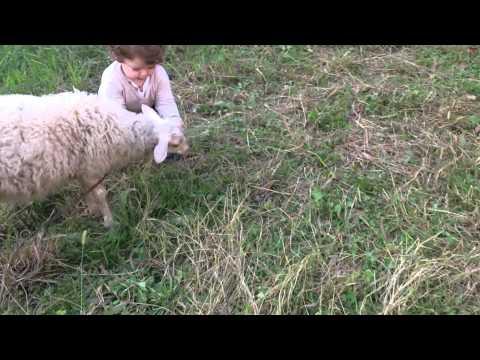 Vauva ja lammas leikkivät – Söpöä katsottavaa
