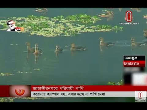 Migratory birds have come to Jahangirnagar University (01-01-2021) Courtesy: Independent TV