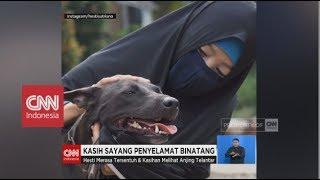 Video Wanita Berhijab Penyelamat Anjing - Kasih Sayang Penyelamat Binatang MP3, 3GP, MP4, WEBM, AVI, FLV Januari 2019
