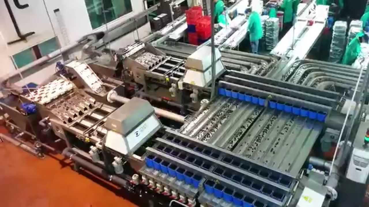 Multiscan i5x2 - i20