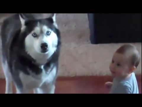 interessante discussione tra un bimbo ed il suo cane!