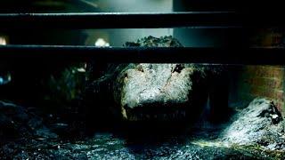 映画『クロール ―凶暴領域―』特別映像