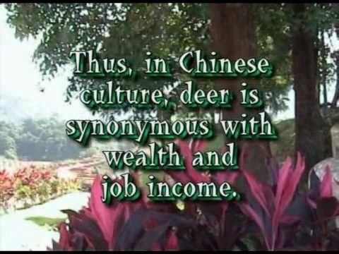 The Deer – Graceful Symbol of Wealth and Job Income