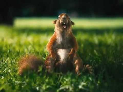 Snickers - Eichhörnchen