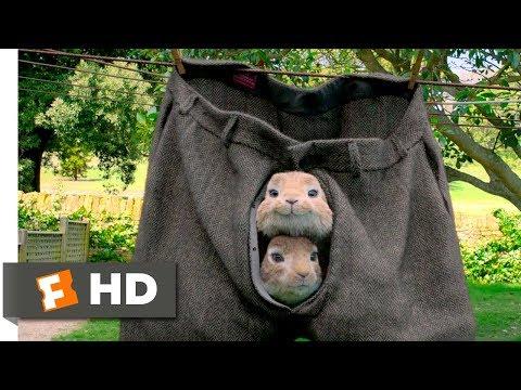Peter Rabbit (2018) - No Guts, No Glory Scene (3/10)   Movieclips