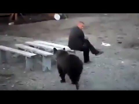 Rosjanin nie przejmuje się niedźwiedziem i zachowuje zimną krew