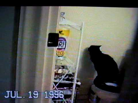 Cat peeing in toilet video
