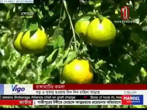 Demand increasing for Rangamati Oranges (21-11-2017)