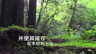 2015年国际森林日