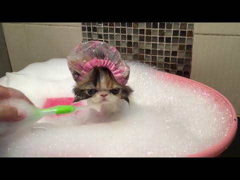gatto che fa la doccia quasi come se fosse un umano!