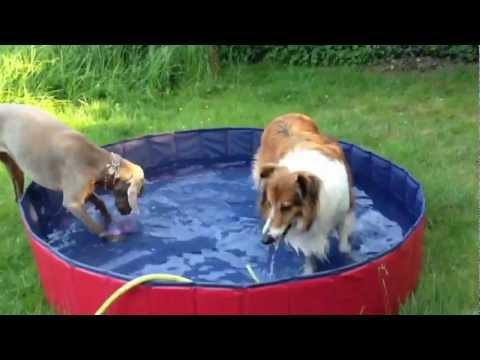 Hundepool von Karlie auspacken - wasser rein - fertig ! Hunde Spass vom Feinsten ! mit Weimaraner