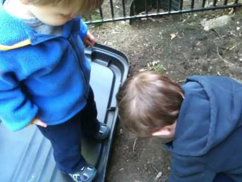 Noah Loves Bees Video