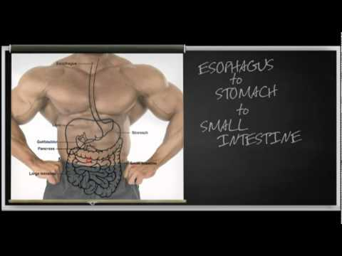 MassiveJoes.com – How Whey Protein Works – Optimum Nutrition 100% Whey Protein Powder