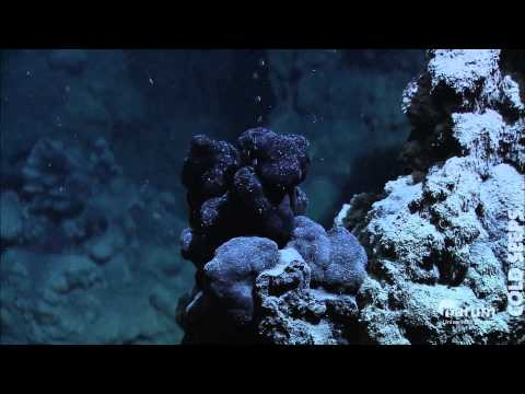 Cold Seeps in the deep sea