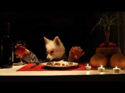 Human Dog Goes Fine Dining and Wine Tasting with Hands