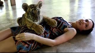 Hot Girl And Tiger Cub In Tiger Kingdom Chiang Mai Thailand