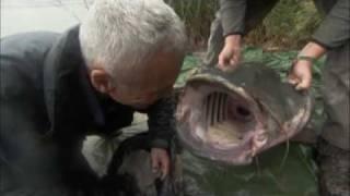 River Monsters: Monster Catfish