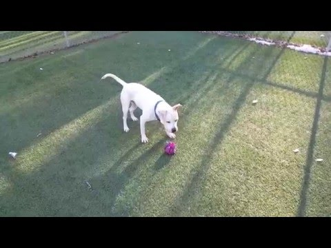 Darwin~ Available for Adoption with KC Pet Project KCMO