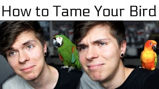How to Tame Your Bird/Make them like you more! (feat. Sun Conure & Severe Macaw) by Tyler Rugge