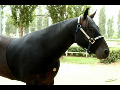 Cooler la coperta che asciuga il cavallo in pochi minuti - Reny Horse Equipment.mpg
