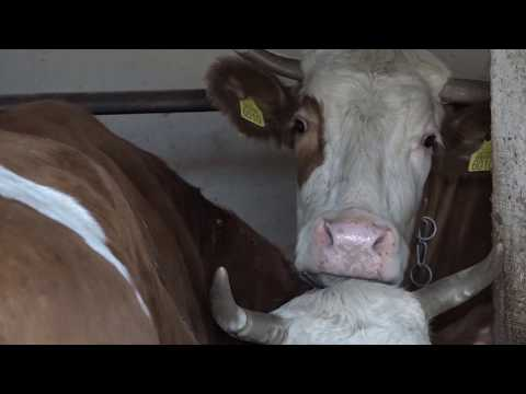 Ministarstvo poljoprivrede Srbije objavilo je Pravilnik o korišćenju podsticaja za organsku stočarsku proizvodnju