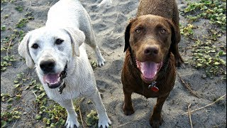 Dogs First Time on the Beach