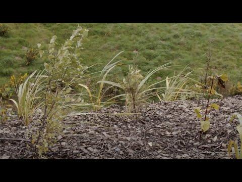 Planting on Transmission Gully – January 2021