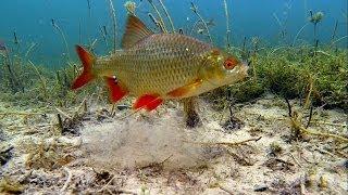 Зимняя рыбалка поплавок подводная съёмка.