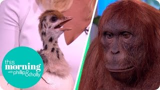 The Incredible Spy in the Wild Robot Animals | This Morning