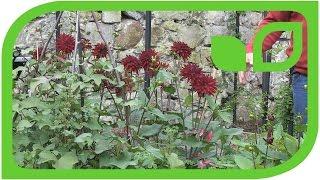 Das Lubera Paradiesgärtchen mit Erdfrüchten auf Schloss Ippenburg