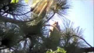Nicole Perretta's Bird Calling YouTube video