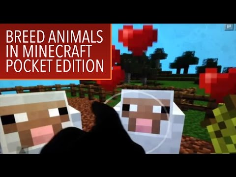 Minecraft PE: Breeding Animals in Creative Mode
