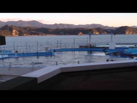 Taiji, Japan - Dolphin Resort Pool