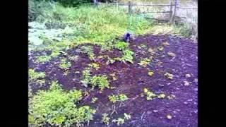 дача, огород, плоскорез с колесом