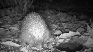 Wildlife Trail Camera - 3.11.2016
