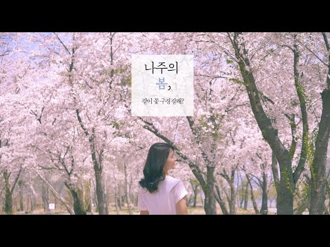 나주 영산포 벚꽃길