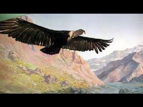 El Condor Pasa – Simon & Garfunkel