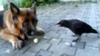 Animals91