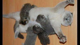 Intenta no morir de ternura con este video, los videos de gatos y gatitos mas tiernos y lindos del mundo! Acepta el Reto y no llores!!Los Videos más Chistosos de Gatos, gatitos, animales, perros, cachorritos, muy divertidos todos los días, los más tiernos, te vas a reir.Siguenos en  https://www.facebook.com/GatosRisicas0 y https://www.twitter.com/GatosRisicasSuscribete Todos los días los mejores videos Gatos y demás animales tiernos y divertidos!! https://www.instagram.com/gatosrisicas/