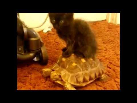 I mačke mogu biti kreteni – Smešni video snimci sa mačkama