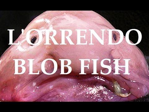 salviamo il blobfish: l'animale più brutto del mondo