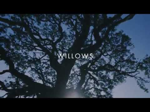 Willows Lyric Video