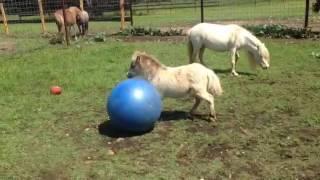 animale calutul se joaca