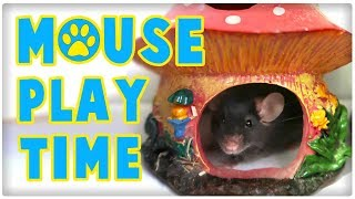 Pet Mouse Playtime Outside Cage | Mouse Behaviour by ErinsAnimals