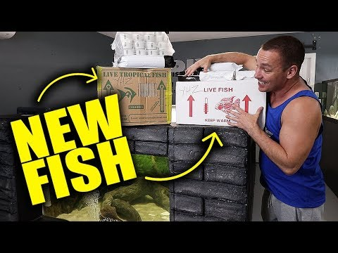 EPIC NEW FISH UNBOXING!!!