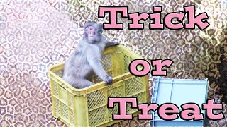 The Mischief To Monkey:Funny Animals